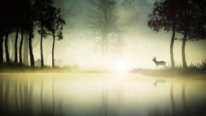 deer-early-riser-sunrise-photography-lake-water-forest-animal-fog-morning-mist-free-wallpapers-640x360